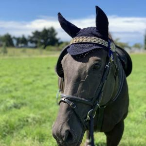 Horse for sale: Dudley - Perfectly Ready Gelding