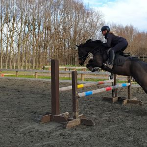 Horse for sale: Stunning GT Jake mare