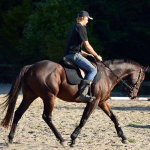 Quality novice show hack/show hunter/dressage horse