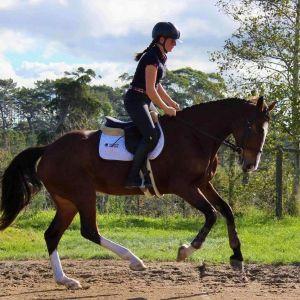 Horse for sale: Weiti Zumba