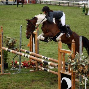 Horse for sale: Superstar Showjumper
