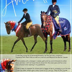 Horse for sale: Stunning Park Hack