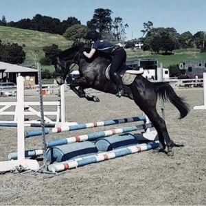Horse for sale: Super Talented TB Gelding