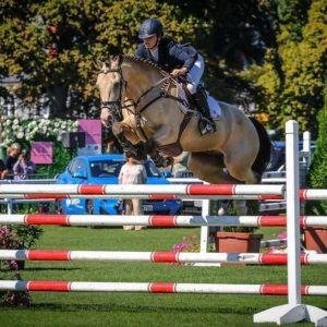 Horse for sale: Fantastic Allrounder