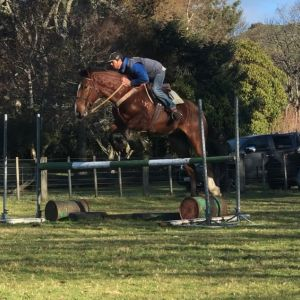 Horse for sale: Hill Country Horses