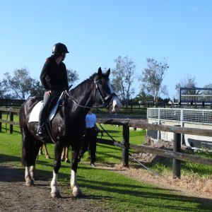 Horse for sale: Stunning  Mare Lovely Nature
