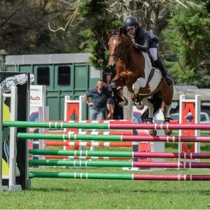 Junior/Young Rider Horse