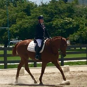 Horse for sale: All rounder Gelding
