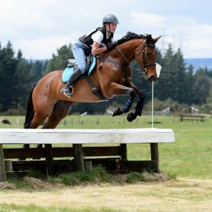 Horse for sale: Rena - super first horse