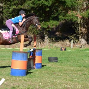 Horse for sale: Paddy - Quiet Gelding