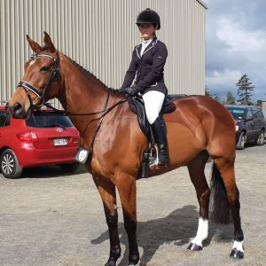 Exceptional dressage mare