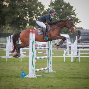 Horse for sale: Talented 7yo Show Jumper