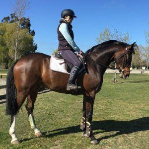 Horse for sale: Glenbrooke Rosarno