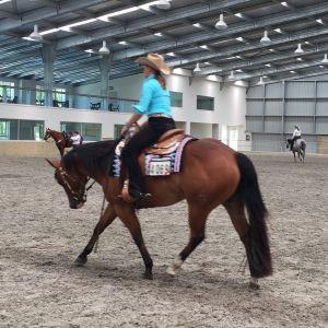 Stunning NZ Champion Quarter Horse Sweetheart