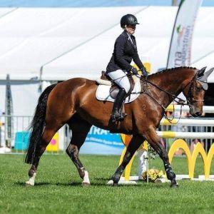 Junior/Amateur Rider Horse