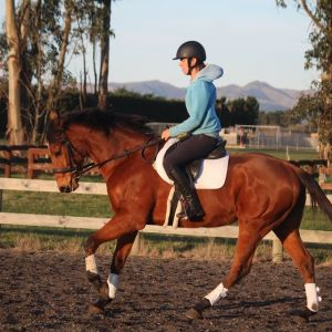 Horse for sale: Sensible and Talented TB
