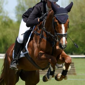 Horse for sale: Stunning Future Prospect