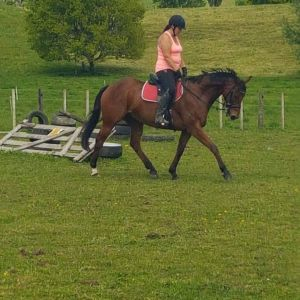 Horse for sale: Outstanding TB Gelding