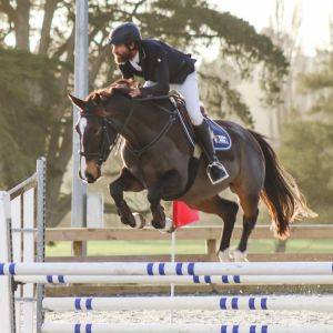 Horse for sale: Talented Sport Horse Gelding