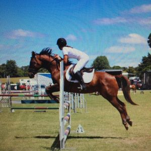 Horse for sale: Safe Hunter/All Rounder