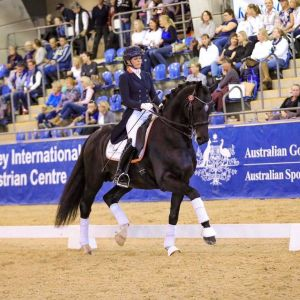 Horse for sale: Exciting Dressage Package