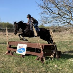 Horse for sale: Talented allrounder