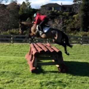 Horse for sale: Super Talented TB