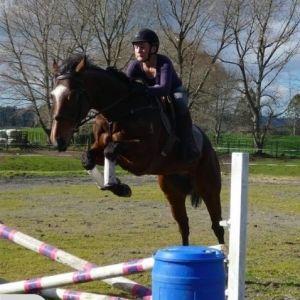 Horse for sale: Stunning 3yo Gelding