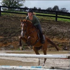 Horse for sale: 5yo. Top Competitive Prospect