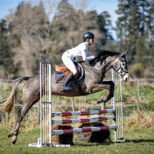 Horse for sale: Warmblood mare showjumper/showhunter/eventer