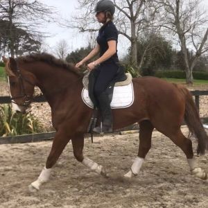 BEAUTIFULLY BRED SPORTHORSE WITH VERSATILE FUTURE