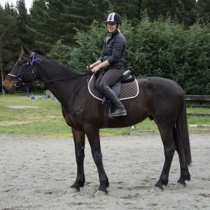 Horse for sale: OTTSB - Lilbitbettor