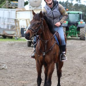 Horse for sale: Super Cool Eventing Horse
