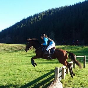 Horse for sale: Talented Project