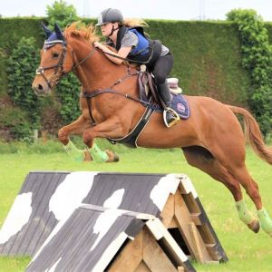 Horse for sale: Eventing & Hunting Schoolmaster