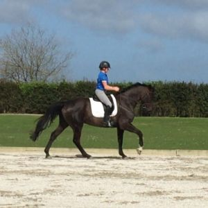 Horse for sale: Talented dressage horse