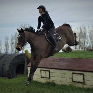 Horse for sale: SAFE, HONEST AND BRAVE