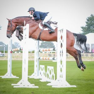 Horse for sale: EXCEPTIONAL JUMPER