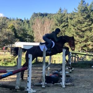 Horse for sale: Very Talented mare by Ngahiwi One Eye