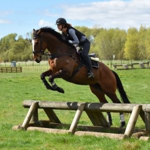 Horse for sale: Your next competition prospect