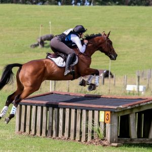 Horse for sale: Eventing Schoolmaster