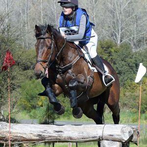 Horse for sale: SAFE, HONEST AND KIND SCHOOLMASTER