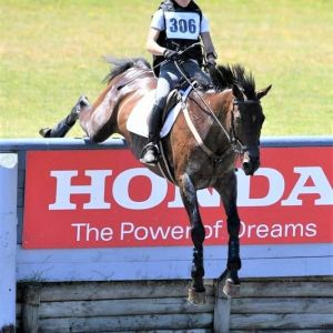 Top level 4* eventing gelding