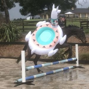 Horse for sale: Henry - Super Fun and Safe