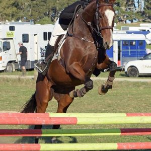 Horse for sale: TALENTED EVENTING PROSPECT
