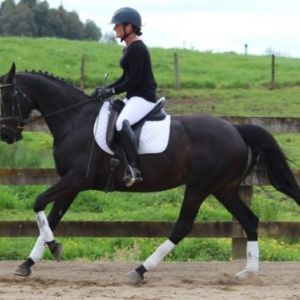 Horse for sale: STUNNING DORINGCOURT MARE