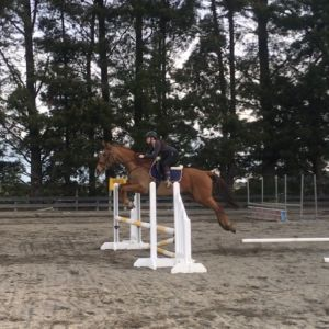 Horse for sale: Project with Potential