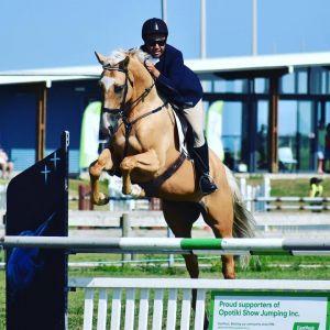 Horse for sale: Stunning Warmblood Gelding