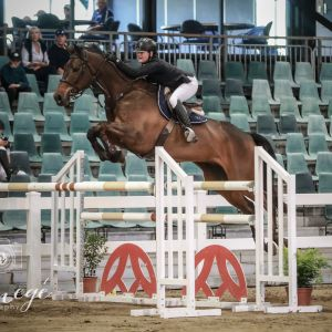 Scopey Talented Young Rider/1.40 Horse