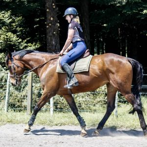 Horse for sale: Ultimate allrounder